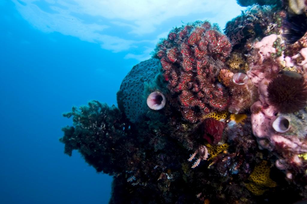 Diving 10