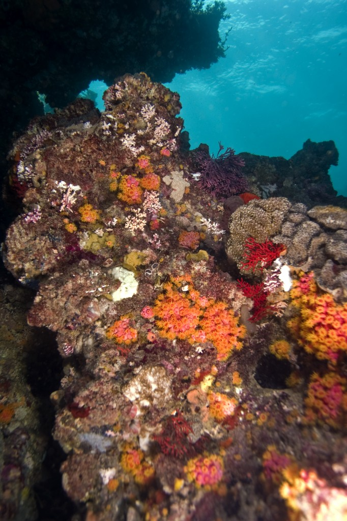 Diving 24